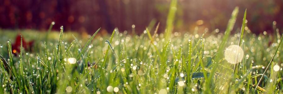 grass-morning-dew-sunrays-forest-wide-hd-wallpaper